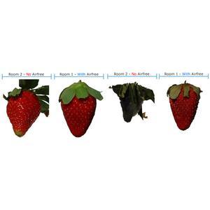Airfree p1000 strawberry test